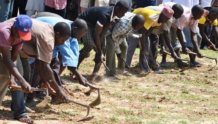 Farmers farming