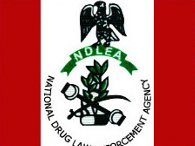 ndlea evaluation essay