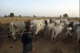 Fulani leaders proffer solution to Plateau crisis