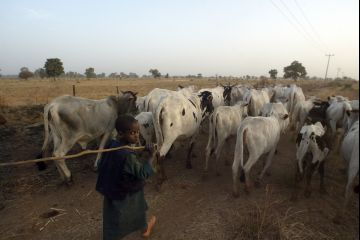 Gunmen kill 260 people, rustle 2,501 cows in Plateau