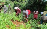 Women-led farm initiative aims for peace, prosperity in Kenya