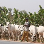 Nasarawa massacre: Victims were tied before execution, Fulani leader alleges