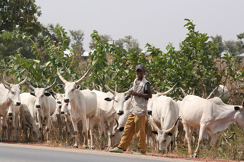 Honourable Sunday raised alarm over the disbursement and utilisation of the N100b released for the construction of mini ranches across the country.