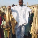 Kano shuts down tannery where 4 employees died