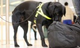 Nigeria Police deploys sniffer dogs to airports