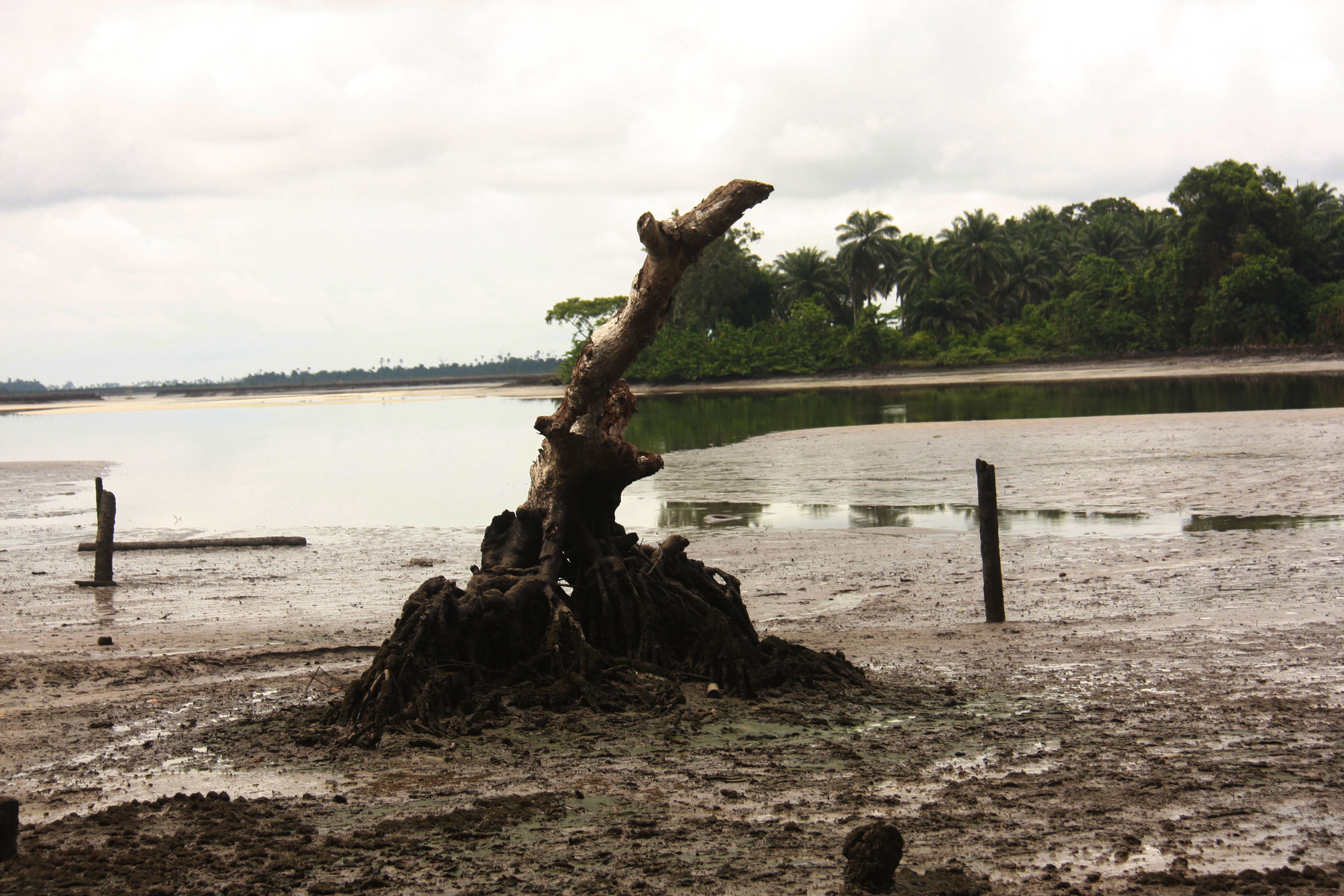 Effect of the Oil spills on the peoples plants