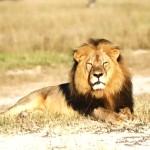 Zimbabwe demands extradition of U.S. dentist who killed lion