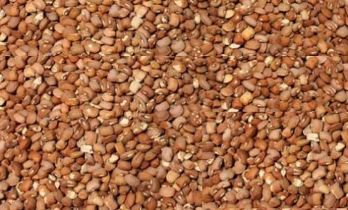 Beans-504x305