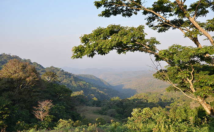 The assessment of the nigerian forest