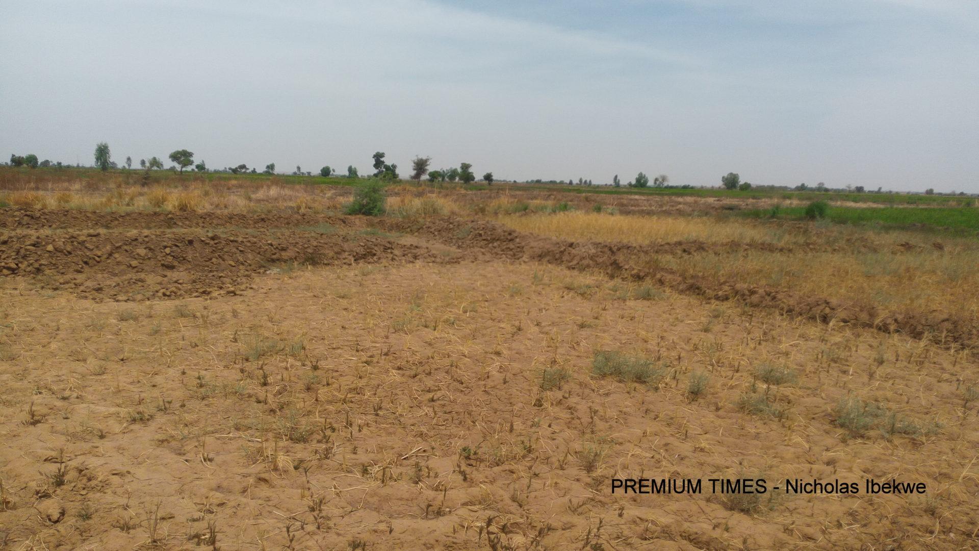 Nigeria has succeeded in preventing 'invasive plant pests'- Minister