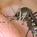 Africa: Malaria Care Improves With Cash