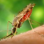 Image for Malaria Vaccine Editorial